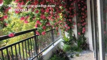 Hoa hồng giả đẹp, hồng leo giả đẹp như thật